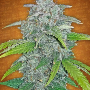 BLUE DREAM'MATIC AUTO